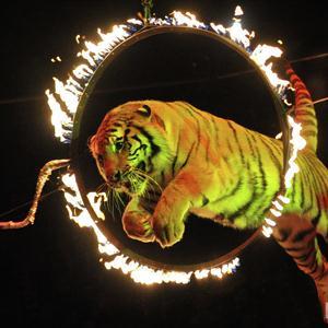 Цирки Тугулыма