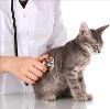 Ветеринарные клиники в Тугулыме
